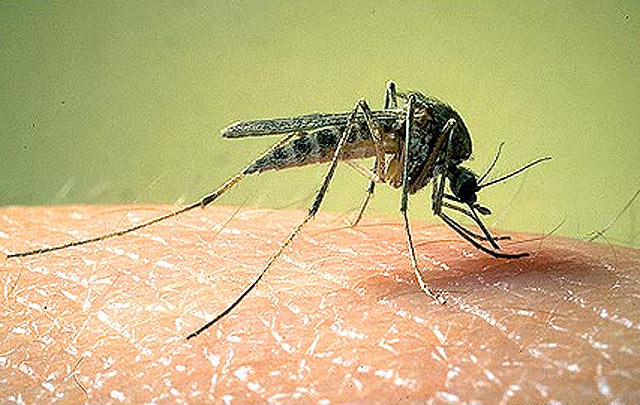 Что делать при укусах комаров, пчёл, оводней